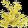 Férule Gommeuse (Galbanum)