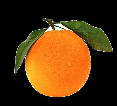 Parfum Feuille d'Oranger, Feuille D'oranger dans les parfums