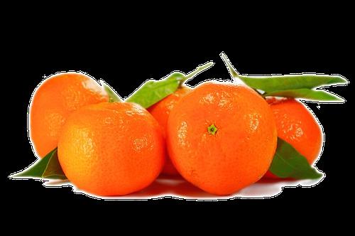 Mandarine d'Inde en parfumerie