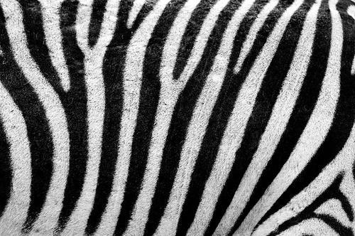 Notes Animales en parfumerie