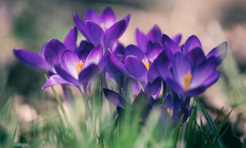 La fleur de violette présente dans les parfums homme en 2021