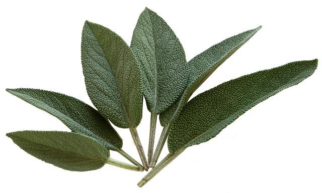 Sauge sclarée dans les parfums, note verte et fixative